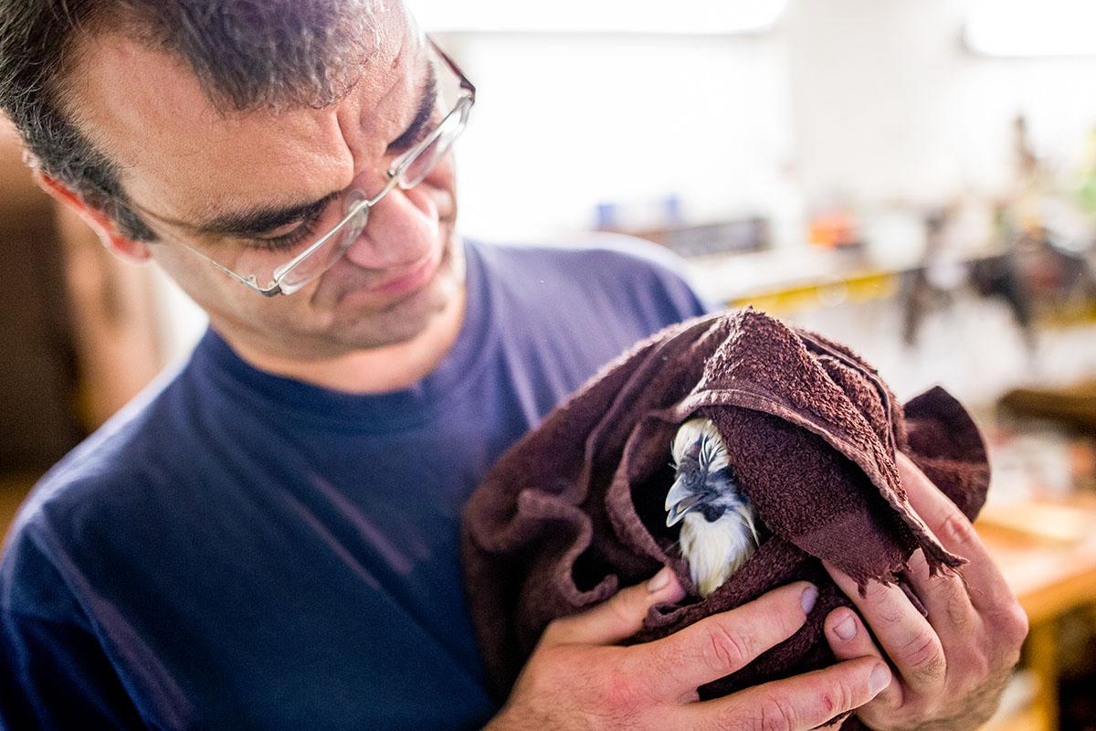 Andreas trocknet das Gefieder seines Huhns erst vorsichtig mit einem Handtuch